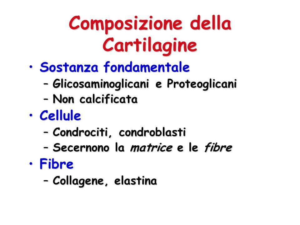 Vascolarizzazione La cartilagine è generalmente avascolareLa cartilagine è generalmente avascolare –L osso è altamente vascolarizzato Nutrienti e sostanze di rifiuto diffondono attraverso la matriceNutrienti e sostanze di rifiuto diffondono attraverso la matrice