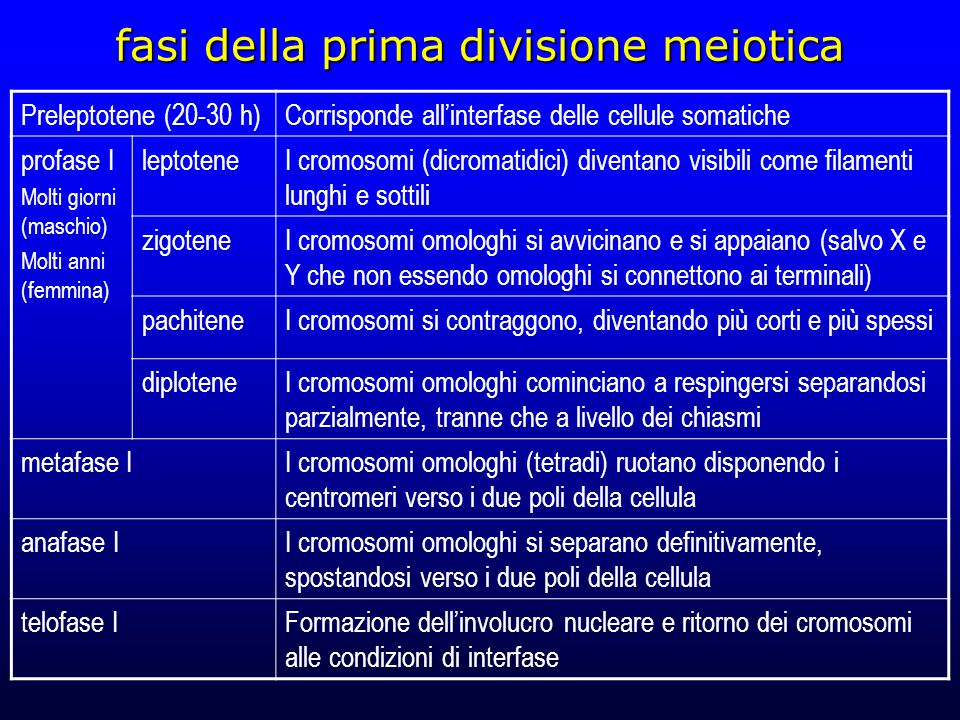 fasi della prima divisione meiotica Preleptotene (20-30 h)Corrisponde all'interfase delle cellule somatiche profase I Molti giorni (maschio) Molti anni (femmina) leptoteneI cromosomi (dicromatidici) diventano visibili come filamenti lunghi e sottili zigoteneI cromosomi omologhi si avvicinano e si appaiano (salvo X e Y che non essendo omologhi si connettono ai terminali) pachiteneI cromosomi si contraggono, diventando più corti e più spessi diploteneI cromosomi omologhi cominciano a respingersi separandosi parzialmente, tranne che a livello dei chiasmi metafase II cromosomi omologhi (tetradi) ruotano disponendo i centromeri verso i due poli della cellula anafase II cromosomi omologhi si separano definitivamente, spostandosi verso i due poli della cellula telofase IFormazione dell'involucro nucleare e ritorno dei cromosomi alle condizioni di interfase