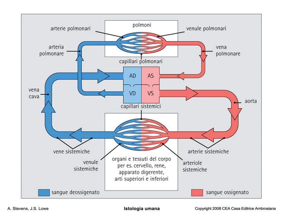 Arteriole o Venule ? Fig. 8.12