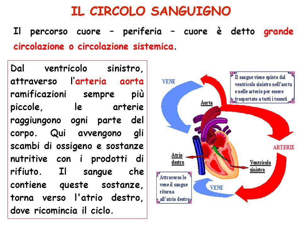 Dal ventricolo sinistro, attraverso l'arteria aorta ramificazioni sempre più piccole, le arterie raggiungono ogni parte del corpo. Qui avvengono gli s