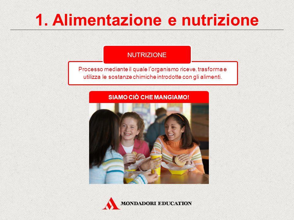 1. Alimentazione e nutrizione Il modo in cui forniamo alimenti al nostro organismo. ALIMENTAZIONE