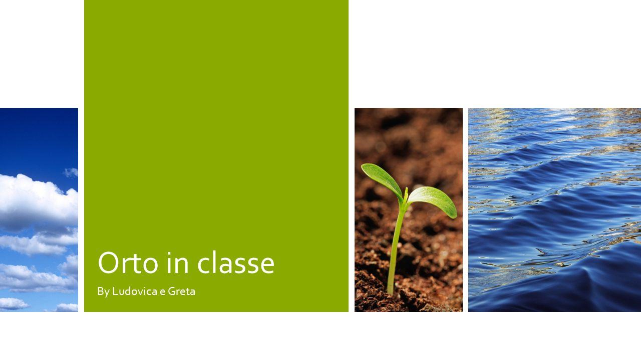 I nostri semi stanno crescendo- 3° settimana 12 ECCO LE PIANTINE.