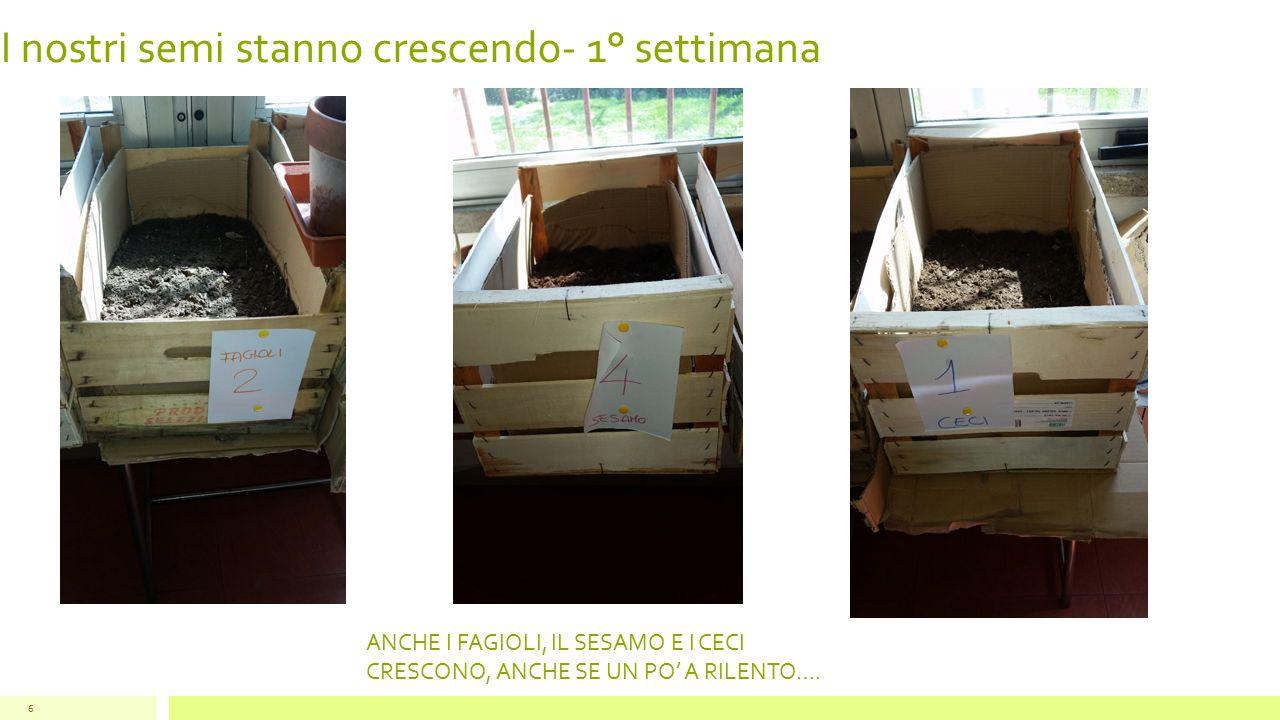I nostri semi stanno crescendo- 1° settimana 7 ANCHE I SEMI DI ZUCCA CRESCONO A VISTA D'OCCHIO!!!!