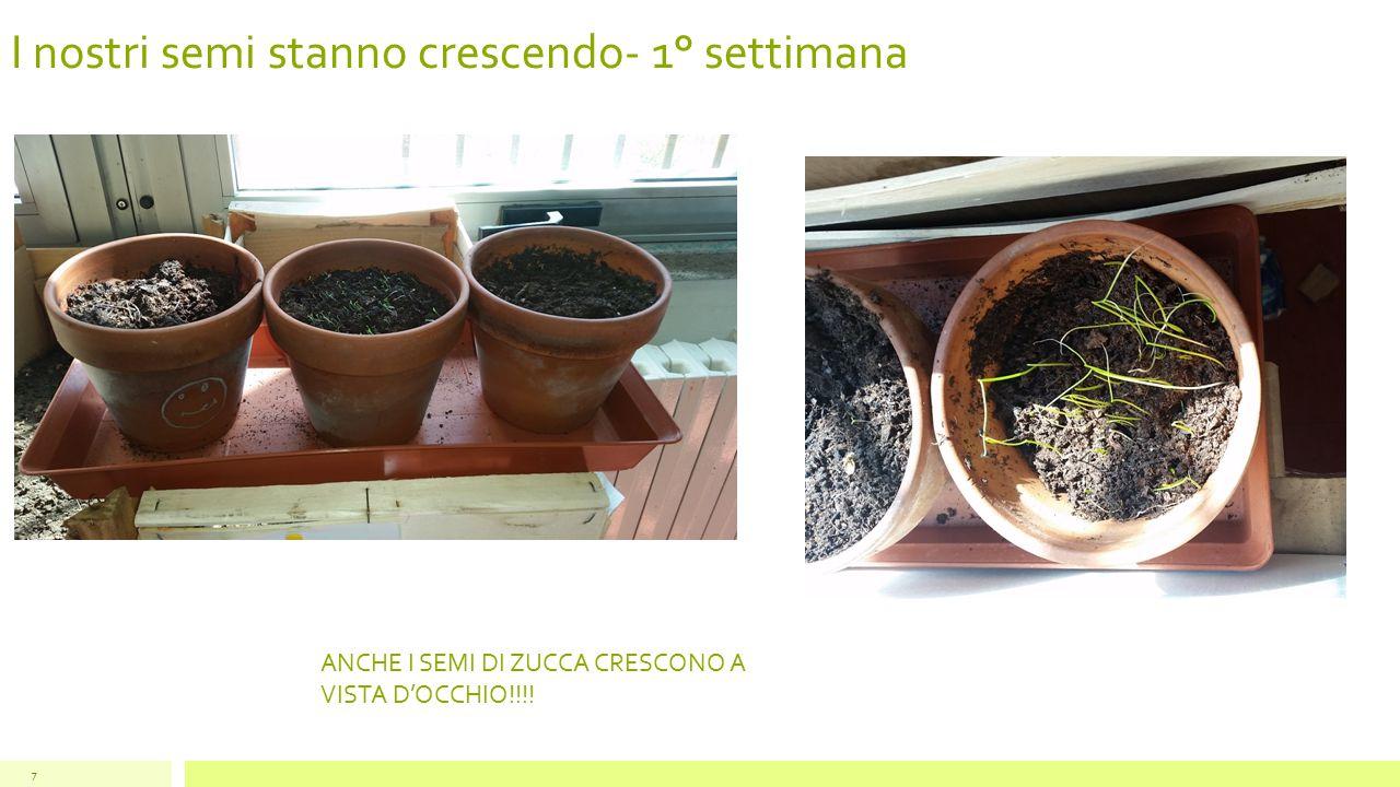 I nostri semi stanno crescendo- 2° settimana 8 LE NOSTRE PIANTINE CRESCONO A VISTA D'OCCHIO.