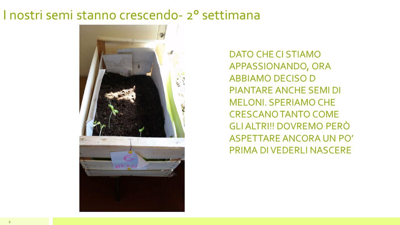 I nostri semi stanno crescendo- 3° settimana 10 ECCOLI I NOSTRI SEMI DI ZUCCA!.