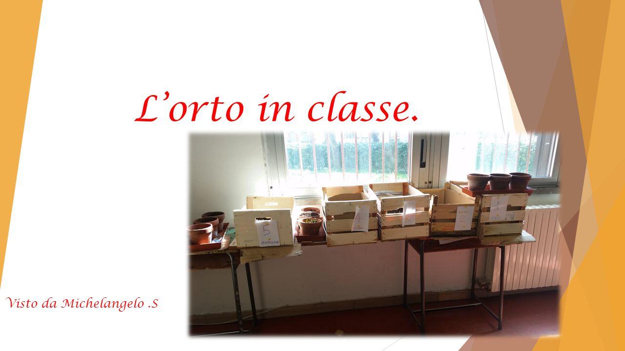 L'orto in classe. Visto da Michelangelo.S