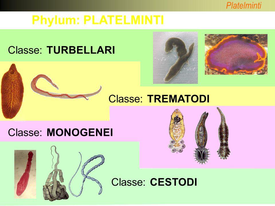 Platelminti