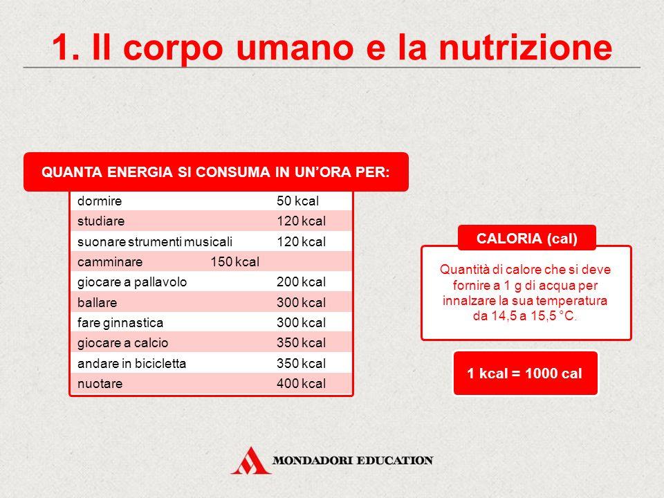 5. Verifica le tue conoscenze Individua l'intruso: Proteine Lipidi Calorie Carboidrati