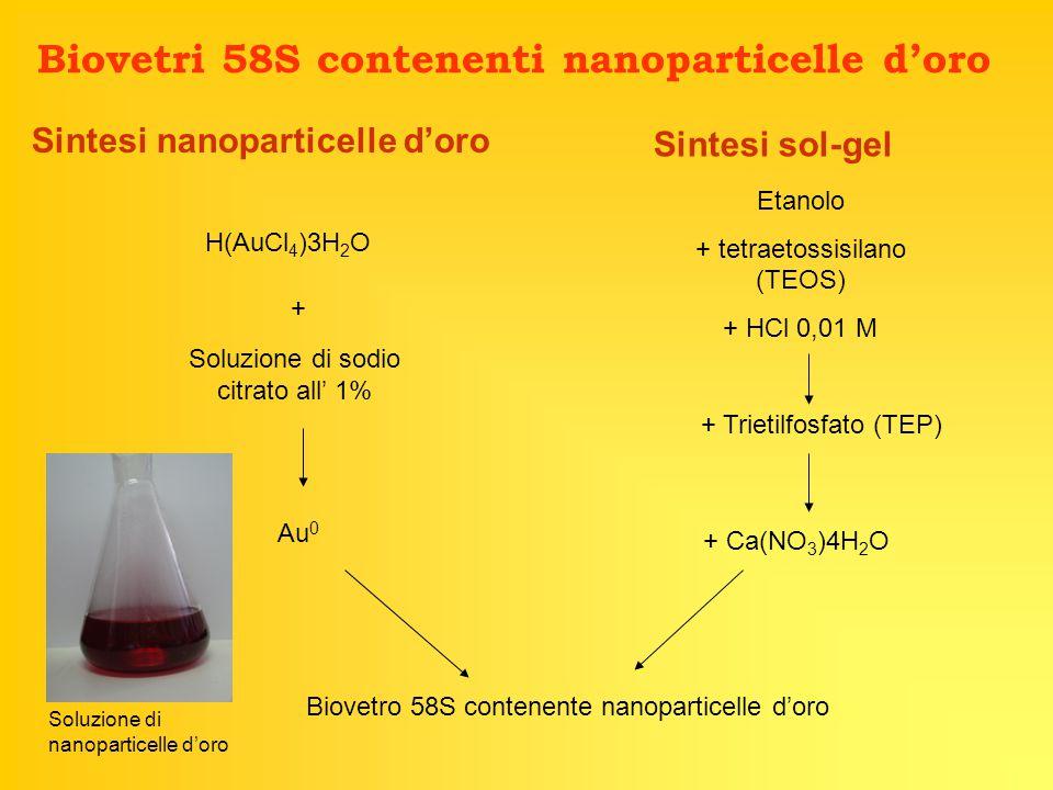 Sintesi nanoparticelle d'oro Sintesi sol-gel Biovetri 58S contenenti nanoparticelle d'oro H(AuCl 4 )3H 2 O + Soluzione di sodio citrato all' 1% Au 0 Etanolo + tetraetossisilano (TEOS) + HCl 0,01 M + Trietilfosfato (TEP) + Ca(NO 3 )4H 2 O Biovetro 58S contenente nanoparticelle d'oro Soluzione di nanoparticelle d'oro