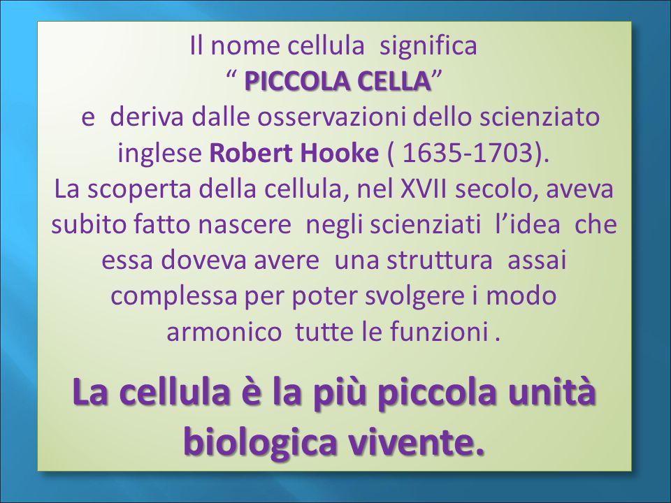Il nome cellula significa PICCOLA CELLA PICCOLA CELLA e deriva dalle osservazioni dello scienziato inglese Robert Hooke ( 1635-1703).