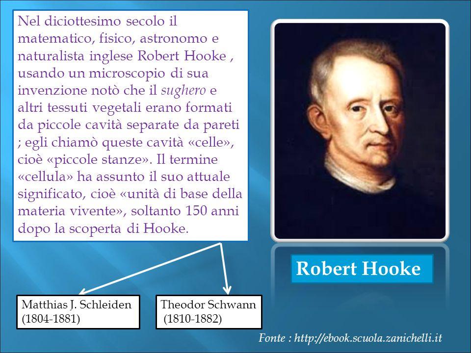 Robert Hooke Nel diciottesimo secolo il matematico, fisico, astronomo e naturalista inglese Robert Hooke, usando un microscopio di sua invenzione notò che il sughero e altri tessuti vegetali erano formati da piccole cavità separate da pareti ; egli chiamò queste cavità «celle», cioè «piccole stanze».
