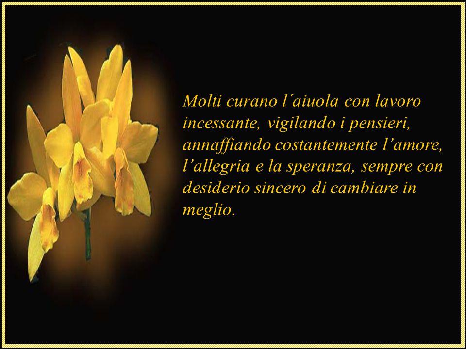 Più in fondo, un'aiuola impressiona per l'altezza dei fiori, è l'aiuola della fede, annaffiata con preghiere e atteggiamenti rigeneratori, arrivano fi