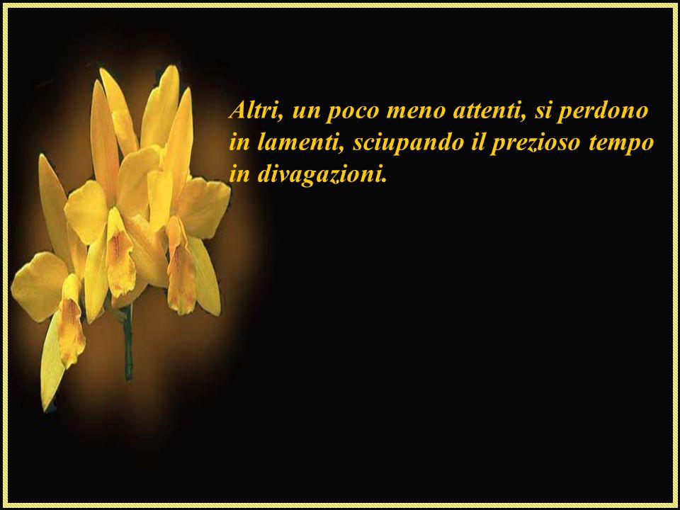 Così, i fiori crescono sempre forti, belli anche di fronte alle difficoltà, proprie della vita, resistono al tempo e alle difficoltà, diventando ogni