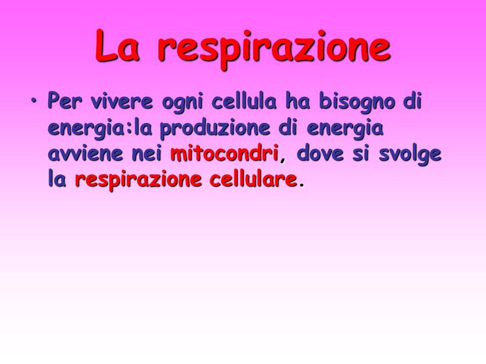 La respirazione Per vivere ogni cellula ha bisogno di energia:la produzione di energia avviene nei mitocondri, dove si svolge la respirazione cellular