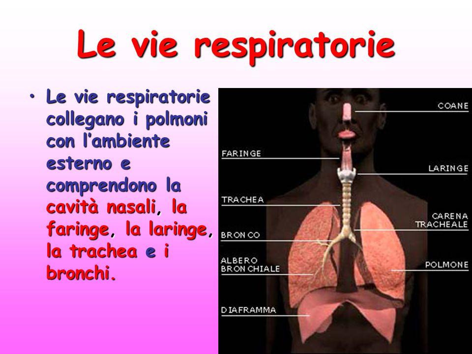 Le vie respiratorie Le vie respiratorie collegano i polmoni con l'ambiente esterno e comprendono la cavità nasali, la faringe, la laringe, la trachea