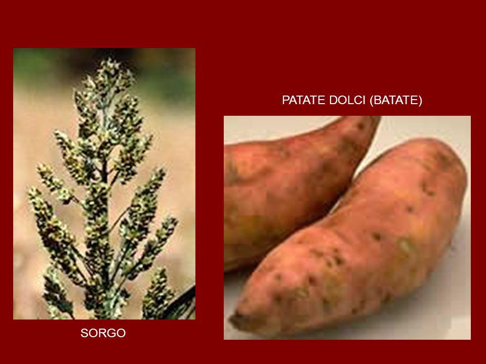 SORGO PATATE DOLCI (BATATE)