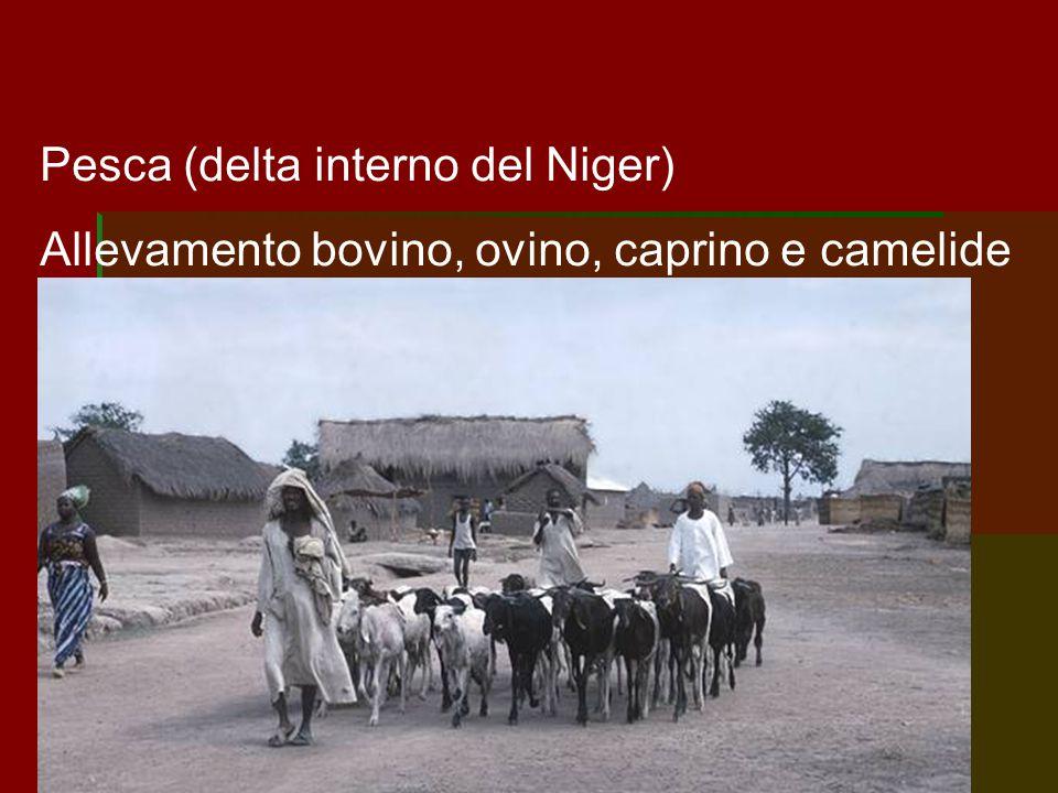 Pesca (delta interno del Niger) Allevamento bovino, ovino, caprino e camelide