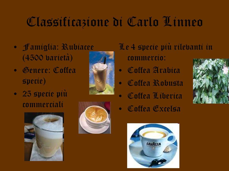 Classificazione di Carlo Linneo Famiglia: Rubiacee (4500 varietà) Genere: Coffea (60 specie) 25 specie più commerciali Le 4 specie più rilevanti in commercio: Coffea Arabica Coffea Robusta Coffea Liberica Coffea Excelsa