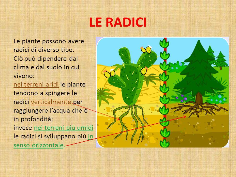 LE RADICI Le piante possono avere radici di diverso tipo.