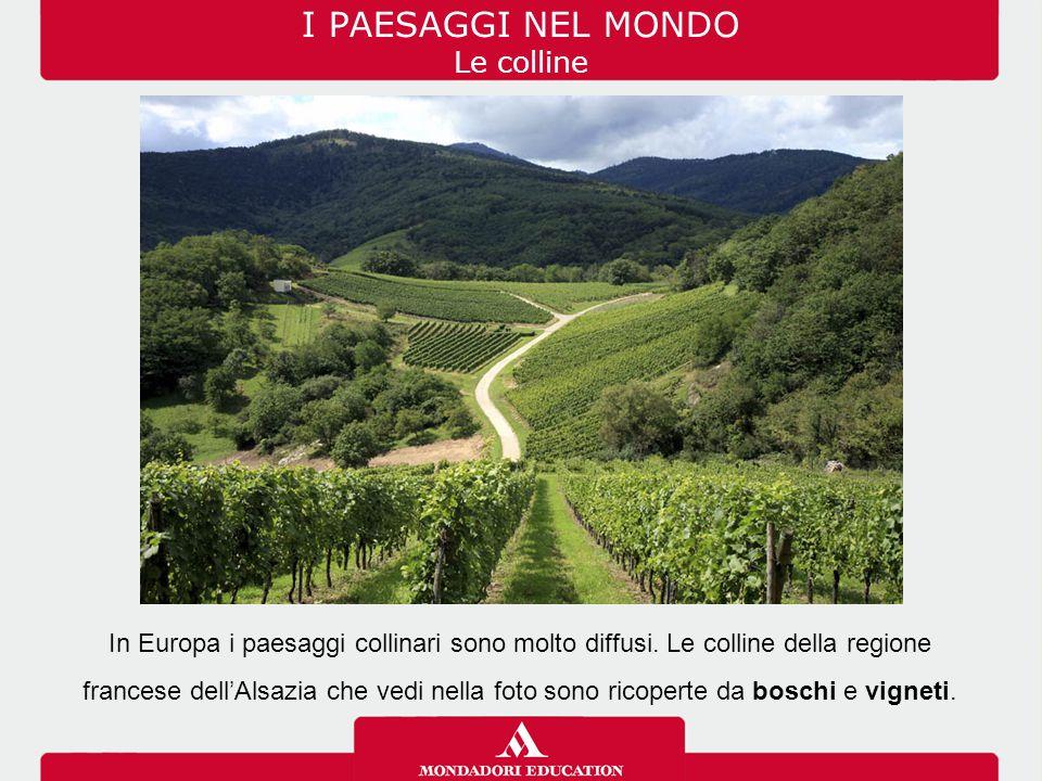 I PAESAGGI NEL MONDO Le colline In Europa i paesaggi collinari sono molto diffusi. Le colline della regione francese dell'Alsazia che vedi nella foto