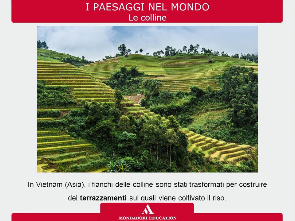 I PAESAGGI NEL MONDO Le colline In Vietnam (Asia), i fianchi delle colline sono stati trasformati per costruire dei terrazzamenti sui quali viene colt