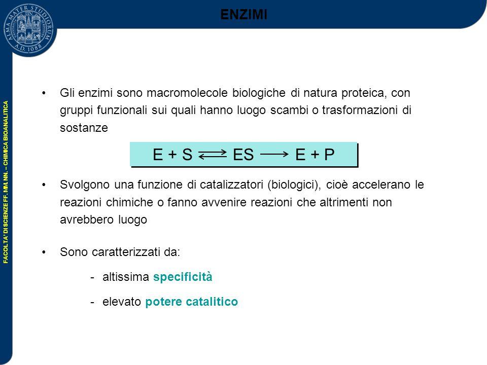 FACOLTA' DI SCIENZE FF.MM. NN. – CHIMICA BIOANALITICA N + R NH 2 O N R NH 2 O..