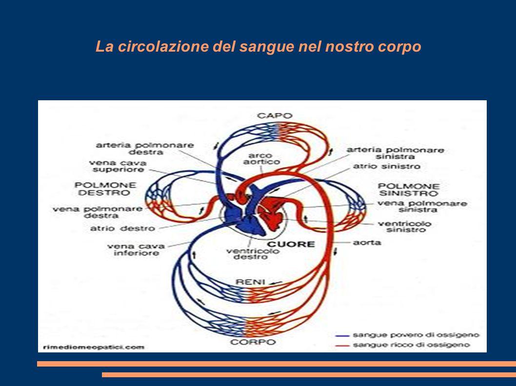 La circolazione del sangue nel nostro corpo