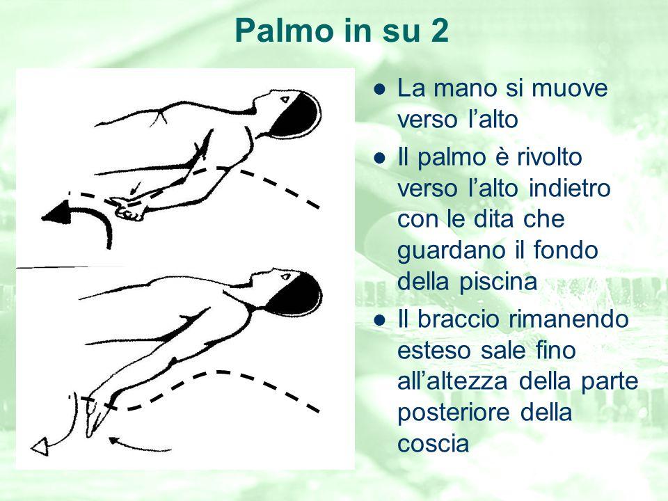 Palmo in su 2 La mano si muove verso l'alto Il palmo è rivolto verso l'alto indietro con le dita che guardano il fondo della piscina Il braccio rimane