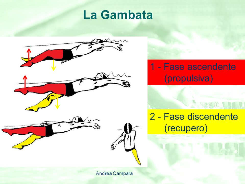La Gambata 2 - Fase discendente (recupero) 1 - Fase ascendente (propulsiva) Andrea Campara