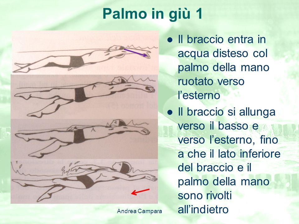 Palmo in giù 1 Il braccio entra in acqua disteso col palmo della mano ruotato verso l'esterno Il braccio si allunga verso il basso e verso l'esterno,