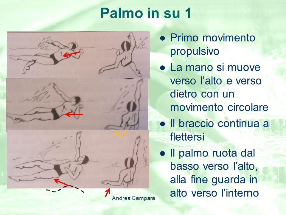 Palmo in su 1 Primo movimento propulsivo La mano si muove verso l'alto e verso dietro con un movimento circolare Il braccio continua a flettersi Il pa