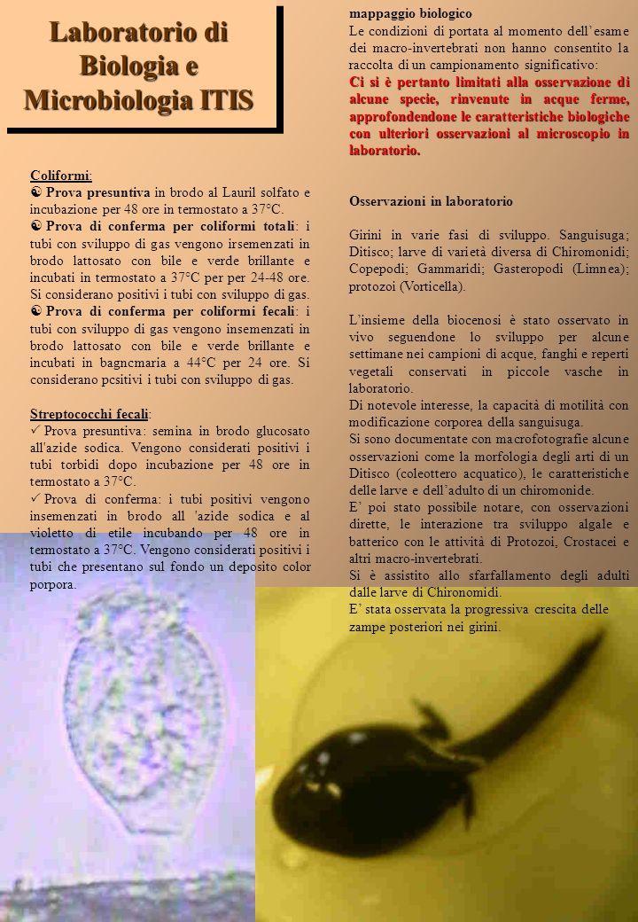Analisi Microbiologiche Ricerca dei Coliformi totali Ricerca dei Coliformi fecali Ricerca degli Strptococchi fecali Osservazioni Biologiche Ricerca di