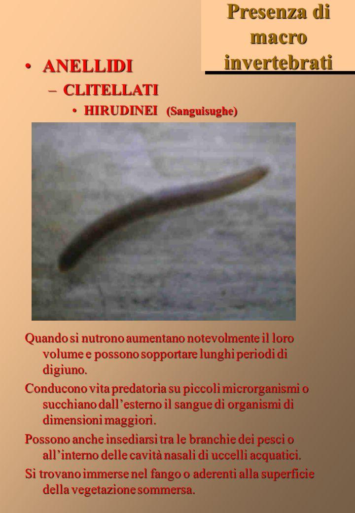 Presenza di macro invertebrati ARTROPODIARTROPODI – INSETTI COLEOTTERI COLEOTTERI – Ditiscidi