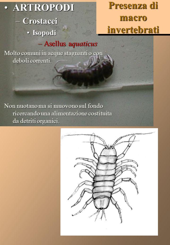 MOLLUSCHI –GASTEROPODI Physa spp.(fontinalis - acuta)Polmonati Physa spp.