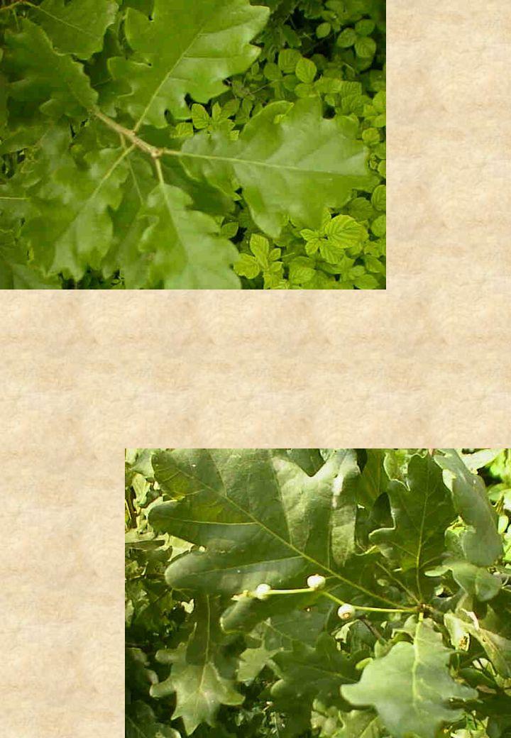 Osservazioni Botaniche Vegetazione spontanea arboreo-arbustiva osservata lungo gli alvei in prossimità dei punti di monitoraggio.Vegetazione spontanea