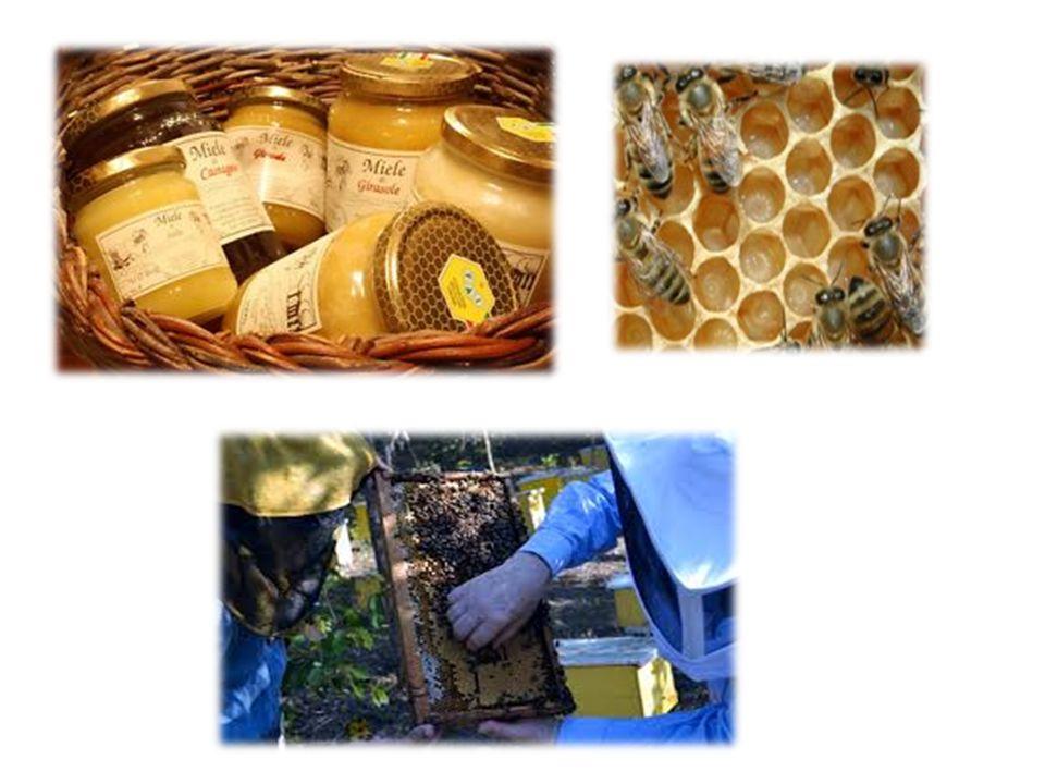 Il miele rappresenta per le api adulte l unico alimento oltre all acqua.
