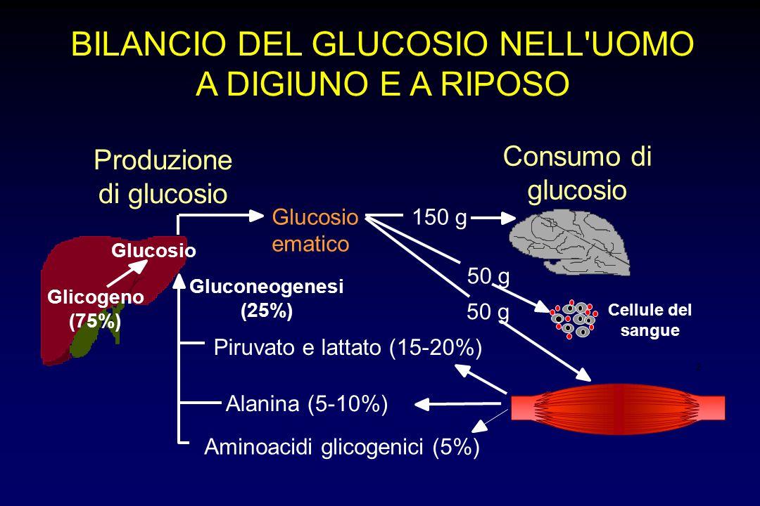 2 BILANCIO DEL GLUCOSIO NELL'UOMO A DIGIUNO E A RIPOSO Produzione di glucosio Consumo di glucosio Glicogeno (75%) Glucosio ematico Cellule del sangue