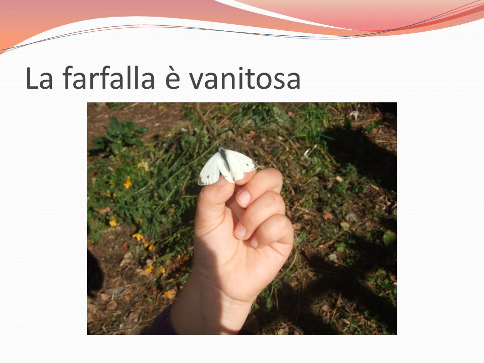 La farfalla è vanitosa