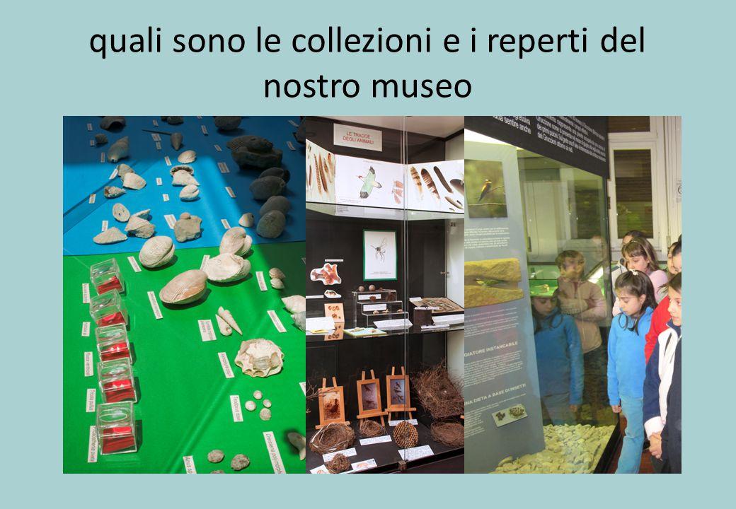 quali sono le collezioni e i reperti del nostro museo
