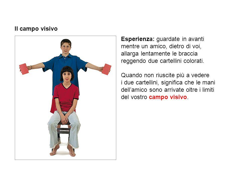 Il campo visivo Esperienza: guardate in avanti mentre un amico, dietro di voi, allarga lentamente le braccia reggendo due cartellini colorati. Quando