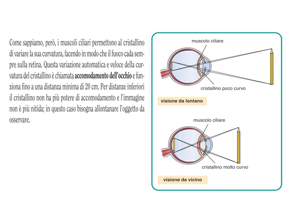 L'occhio funziona in modo simile alla macchina fotografica occhio macchina fotografica il cristallino è la lente che mette a fuoco: grazie ad appositi muscoli può variare la propria curvatura, così che l'immagine si formi sulla retina 3 3 3 la cornea e l'umore acqueo formano un sistema di lenti convergenti simile all'obiettivo di una macchina fotografica 1 1 l'iride è il diaframma che regola la quantità di luce che, attraverso la pupilla, entra nella «camera oscura» costituita da sclerotica e coroide 2 2 2 le cellule della retina (coni e bastoncelli) sono i sensori che registrano la luce in arrivo, come la pellicola o il sensore elettronico 4 4 4