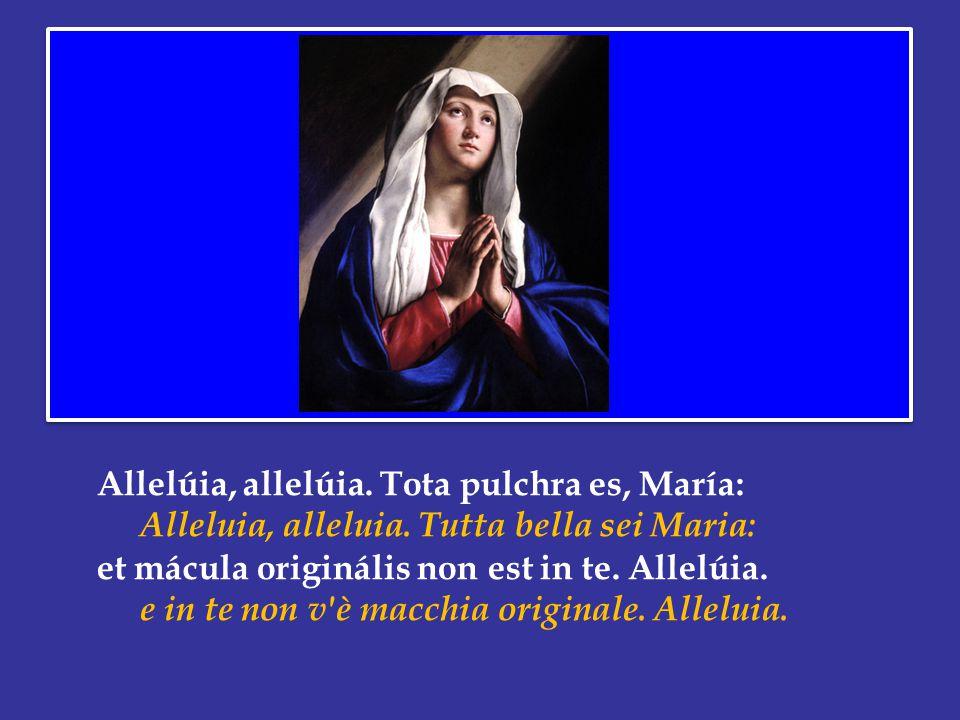 Allelúia, allelúia.Tota pulchra es, María: Alleluia, alleluia.