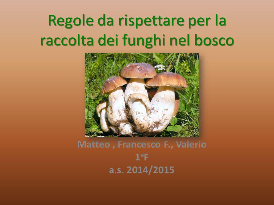 Regole da rispettare per la raccolta dei funghi nel bosco Matteo, Francesco F., Valerio 1 a F a.s. 2014/2015