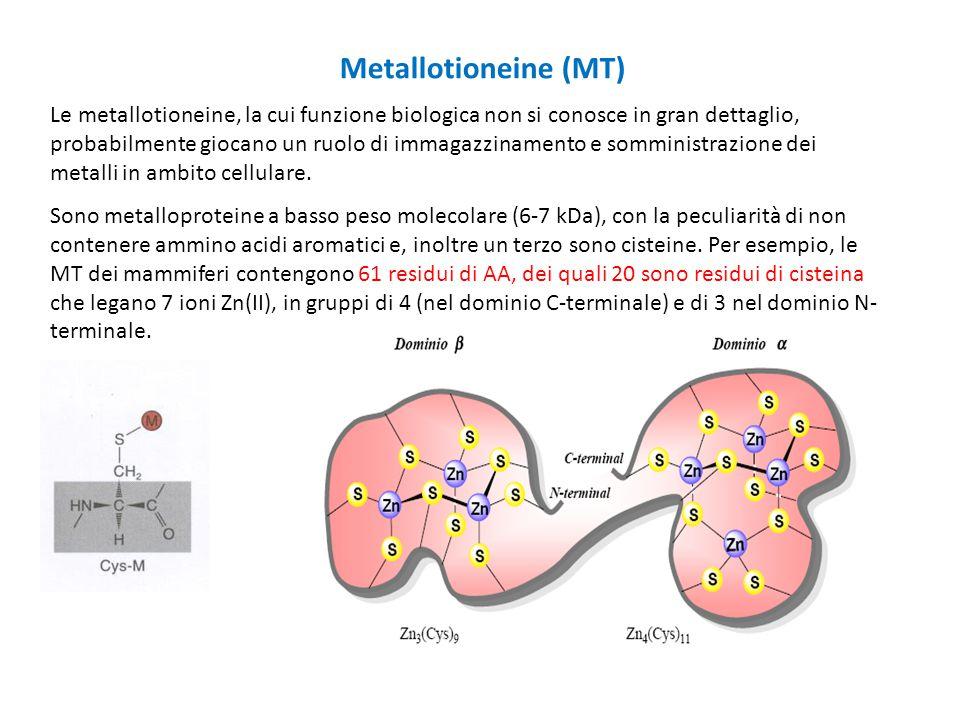 Le metallotioneine, la cui funzione biologica non si conosce in gran dettaglio, probabilmente giocano un ruolo di immagazzinamento e somministrazione