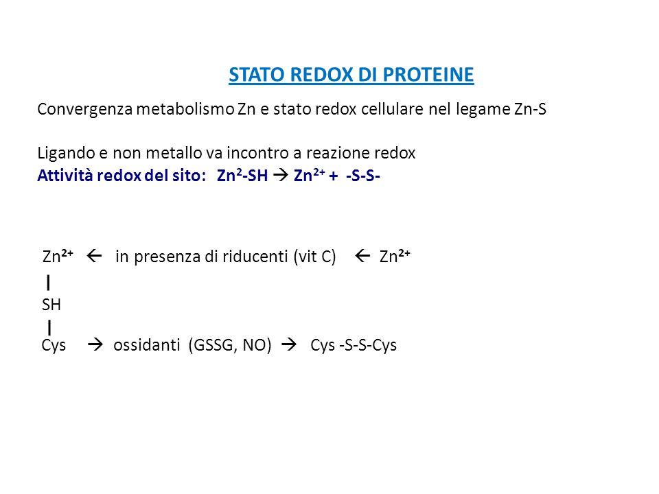 STATO REDOX DI PROTEINE Convergenza metabolismo Zn e stato redox cellulare nel legame Zn-S Ligando e non metallo va incontro a reazione redox Attività