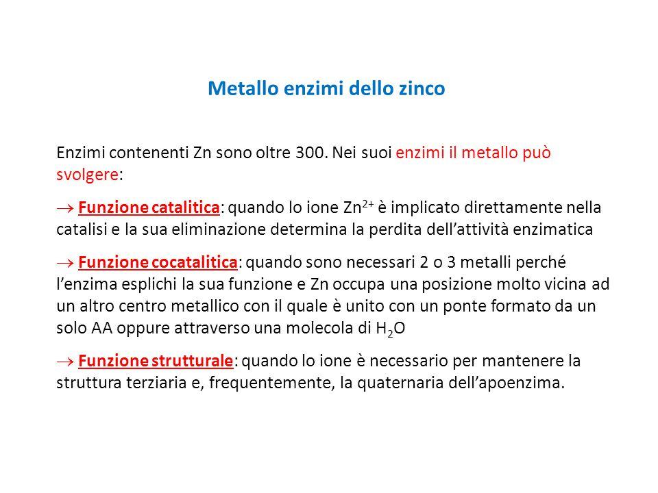 Metallo enzimi dello zinco Enzimi contenenti Zn sono oltre 300. Nei suoi enzimi il metallo può svolgere:  Funzione catalitica: quando lo ione Zn 2+ è