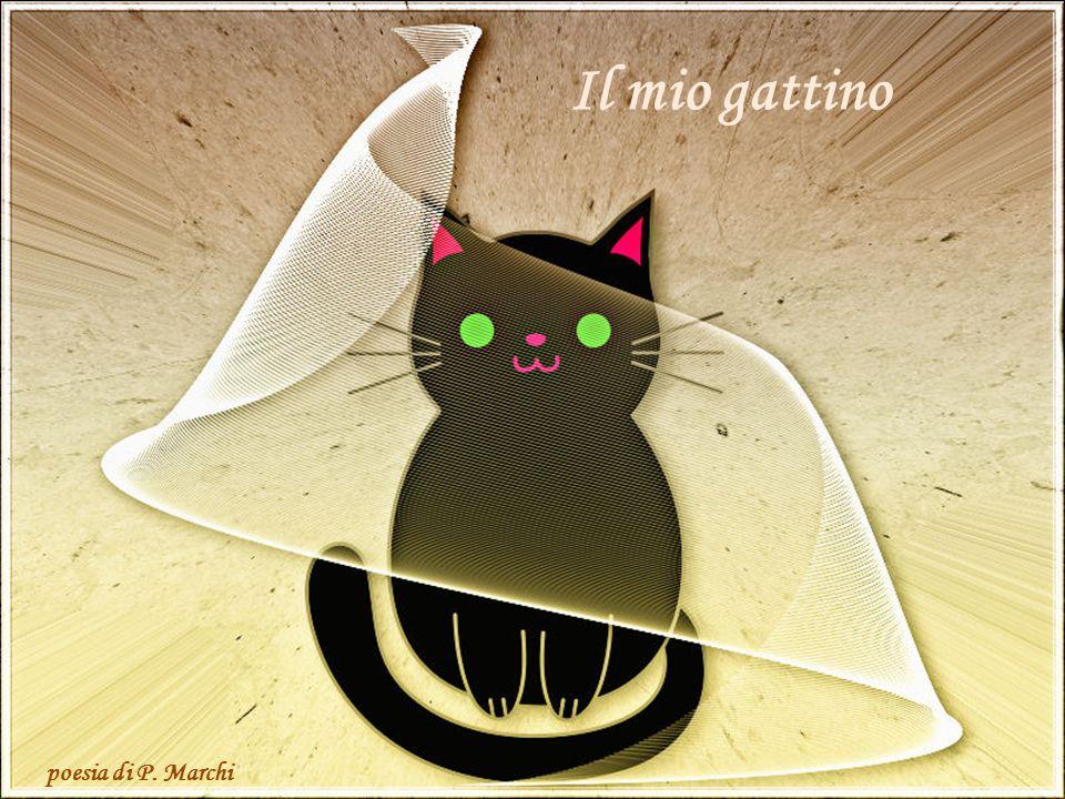 Il mio gattino poesia di P. Marchi