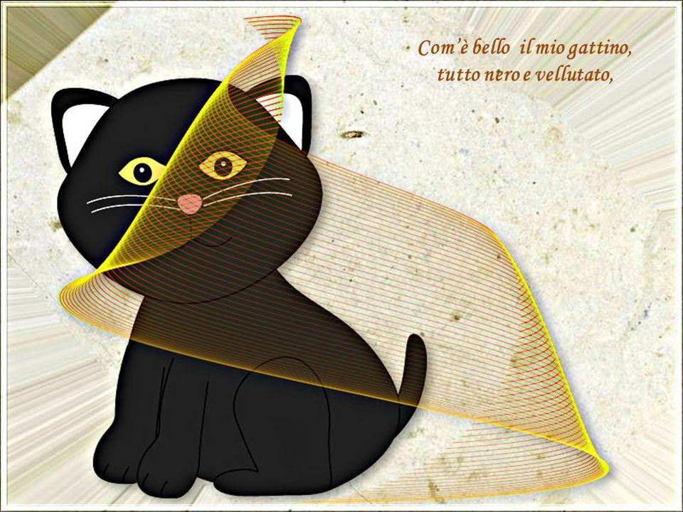 Com'è bello il mio gattino, tutto nero e vellutato,