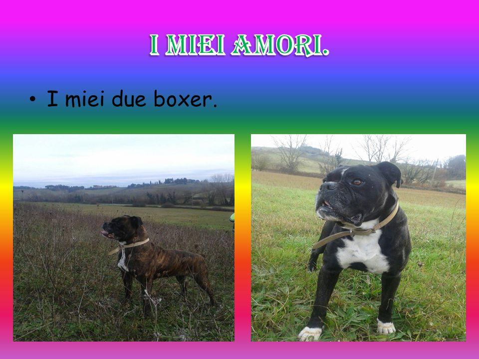 I miei due boxer.