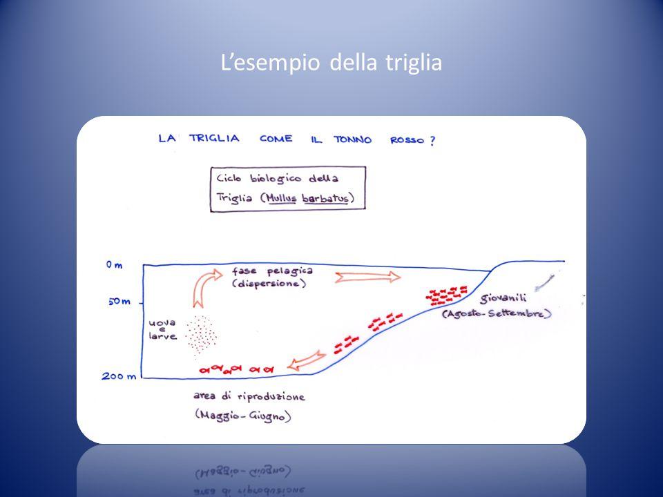 Schema teorico di ciclo biologico